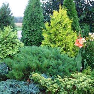 augu stādīšana, kopšana