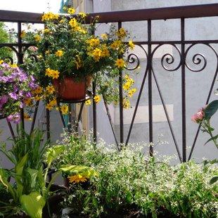 balkonu, terašu augu dizains, kopšana